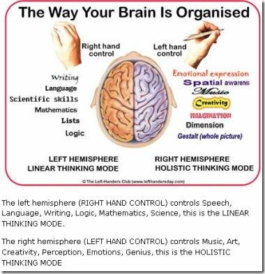 brainorganized